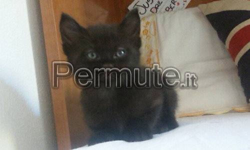 disponibili gattini di 5 mesi